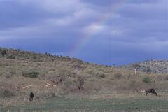 サバンナに虹が・・・。
