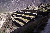 山の斜面に造られた段々畑