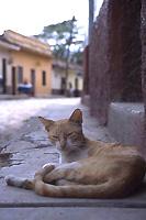コパン・ルイナスの猫