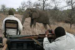 ゾウを発見(クルーガー国立公園)