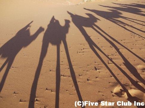 ラクダに揺られて砂漠のど真ん中へ!!360度見渡す限りのサハラ砂漠で1泊キャンプ<モロッコ>