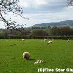 羊の写真集を作りにイングランドへ ~湖水地方&コッツウォルズの旅~