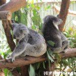 オーストラリアの人気3都市周遊!9日間一人旅