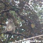 自然溢れる熱帯雨林へ!マレーシア・ブルネイの旅