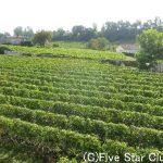 ワインの聖地ボルドーとオランダの田舎を専用車で周るツアー