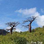 ちょっぴりディープなマダガスカルの旅
