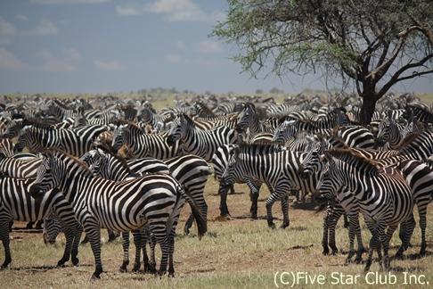 世界の絶景シリーズ第11弾! やっぱりタンザニアのサファリは最強でした! 動物の大群・サバンナでのキャンプに大感動! 一度は訪れたい「ンドゥトゥ動物保護区」