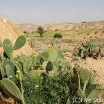 砂漠の違いがわかるようになる!ぐるっとチュニジア周遊の旅