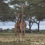 自分だけの動物図鑑完成!ケニアサファリ旅