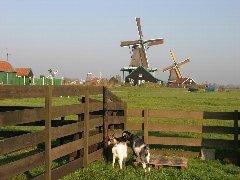 10/12~途中、「オランダ」観光。美しきヨーロッパの風景