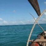 ザンジバルの海でイルカに出会った。 タンザニア