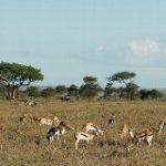 象は立ち上がった~ンゴロンゴロ自然保護区(タンザニア)~