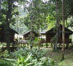 熱帯雨林のボルネオ ダナンバレーからマレー半島まで