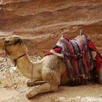 中東3カ国を訪れる旅 ~カタール・シリア・ヨルダン~