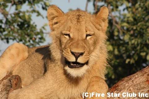 次にサファリに行くなら、ここ!!~ザンビア・サウスルアングア国立公園と南アフリカ・クルーガー国立公園~