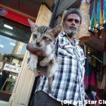 つかまれた猫のその後 ~行くたびに不思議な発見のある国インド~