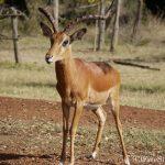 サバンナだけじゃない!魅力いっぱい、ケニアの旅