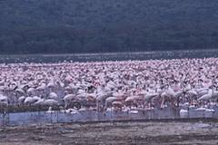 動物王国ケニアへの旅