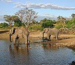 南部アフリカ・感動の8日間