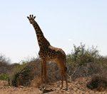 アフリカ旅の悪戯~ケニア~