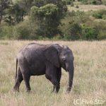 ケニアで癒される、サファリ三昧の旅