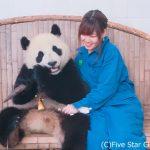 7つの世界遺産を訪れる!古都とパンダとグルメと☆幾千年の歴史を見つめる広大な中国の旅
