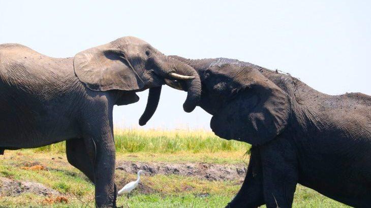 アフリカ情熱大陸!頭の良いゾウに、大迫力の滝に、もうびっくりしたぞうトリップ