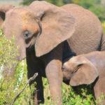 初アフリカ、初サファリはマサイマラ!!ケニアからザンジバルへ。